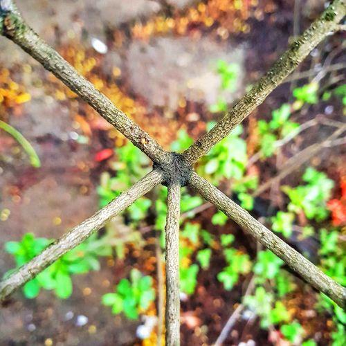 simetria Nature