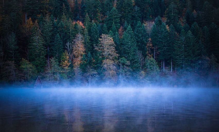 Fog over lake with forest in background