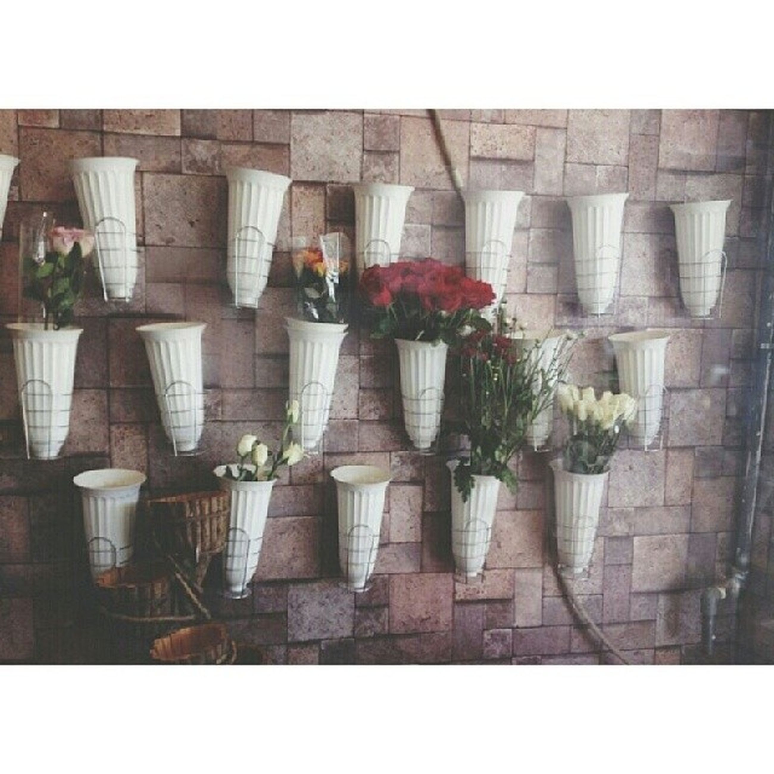 potted plant, transfer print, plant, auto post production filter, flower, wall - building feature, indoors, growth, built structure, architecture, flower pot, wall, shadow, tiled floor, window, sunlight, arrangement, decoration, day, side by side