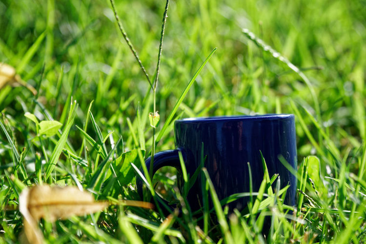 Decorative cup on grass Cup Grass Sunny Sunny Day Sunlight Decoration Decorative Postcard Freshness Fresh Produce Plant Green Color Nature Selective Focus Growth No People Day Field Land Outdoors Close-up Beauty In Nature Mug Technology Container Single Object Food And Drink Personal Accessory