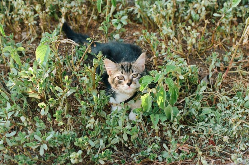 Animal Animal Themes Cat Domestic Domestic Animals Domestic Cat Feline Field Land Leaf Looking At Camera Mammal Nature No People One Animal Pets Plant Plant Part Portrait Vertebrate Whisker