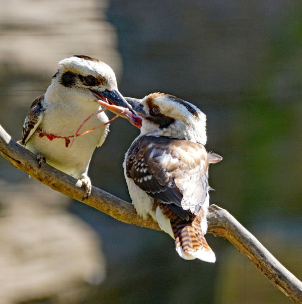Vögel/Birds Animal Animal Themes Animal Wildlife Animals In The Wild Bird Branch Close-up Day Eating Focus On Foreground Food Group Of Animals Mouth Open Nature No People Outdoors Perching Sunlight Two Animals Vertebrate