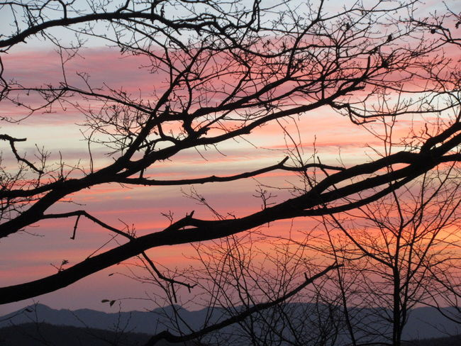 Sunset Tree Beauty In Nature Sky Nature Pink Color Tranquility Orange Color Romantic Sky Parco Nazionale Appennino Tosco-emiliano Multi Colored Tranquility Color Explosion Canon Ixus 285