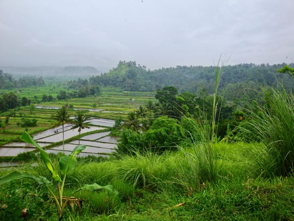 Monsoon in Bali, Monsun auf Bali Bali, Indonesia Baliphotography Beauty In Nature Landscape Misty Monsoonmagic Monsoonseason Mountain Rainy Day Reisterrassen Rice Paddy Rice Terraces Terraced Field Tree Water