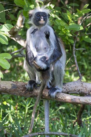 Monkey sitting on branch