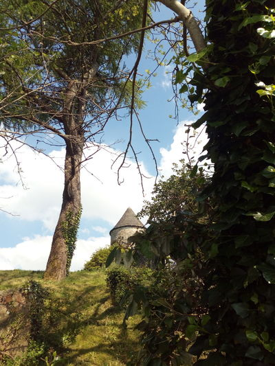 Tree Outdoors Sky Nature Day Built Structure No People Branch Rural Scene Building Exterior Tree Area Springtime Growth Fragility Old Building  Castle Park Ireland🍀 Landscape