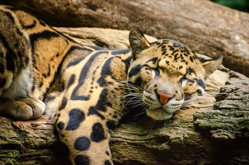 Animal Animal Themes Feline Animal Wildlife Mammal Cat Animals In The Wild Relaxation