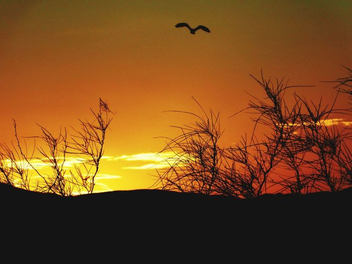 Flight of a culture... Joshua Tree, CA High Desert Wildlife Desert Joshua Tree Predator Migration Vulture Bird Flying Sunset Tree Bird Of Prey Silhouette Sky Spread Wings