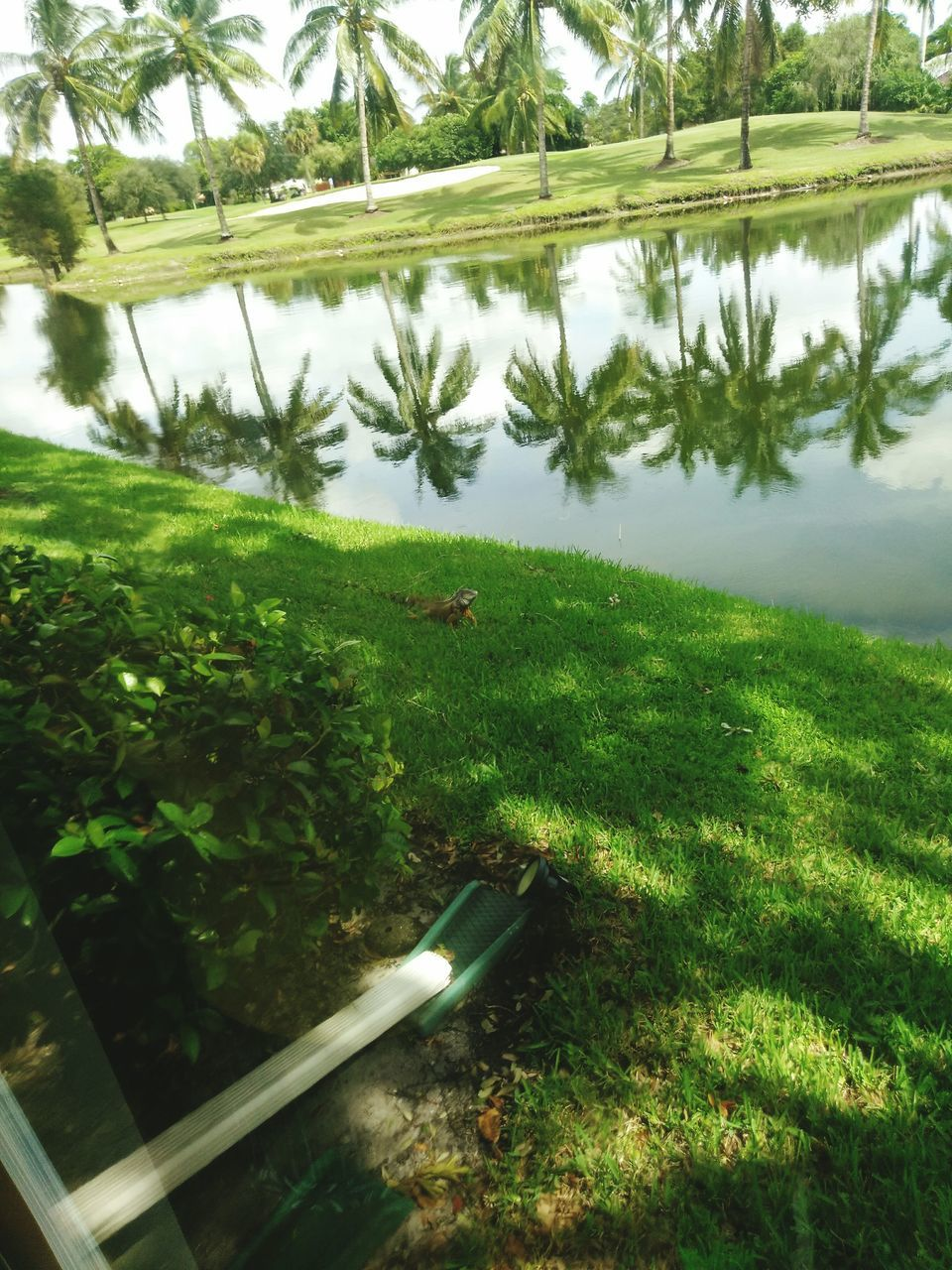 grass, nature, green color, water, day, tree, outdoors, no people, growth, tranquility, reflection, tranquil scene, field, beauty in nature, landscape, plant, scenics, lake, sky