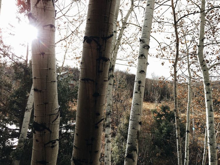 the aspen outside the door. Utah Wasatch Mountains Wasatch County