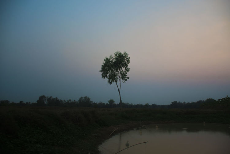 Rice field Rice Field Tree Plant Beauty In Nature Sky Tranquility Tranquil Scene Scenics - Nature Growth Nature No People Non-urban Scene Environment Landscape Land Field Water Copy Space Silhouette Sunset Outdoors