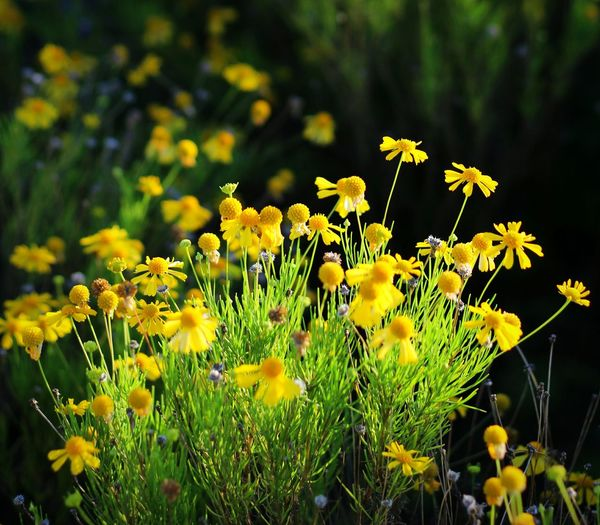 Flower Flowers Flowerbed Flowerbeds Flowercollection Colours Canon CanonT5 Canonphotography