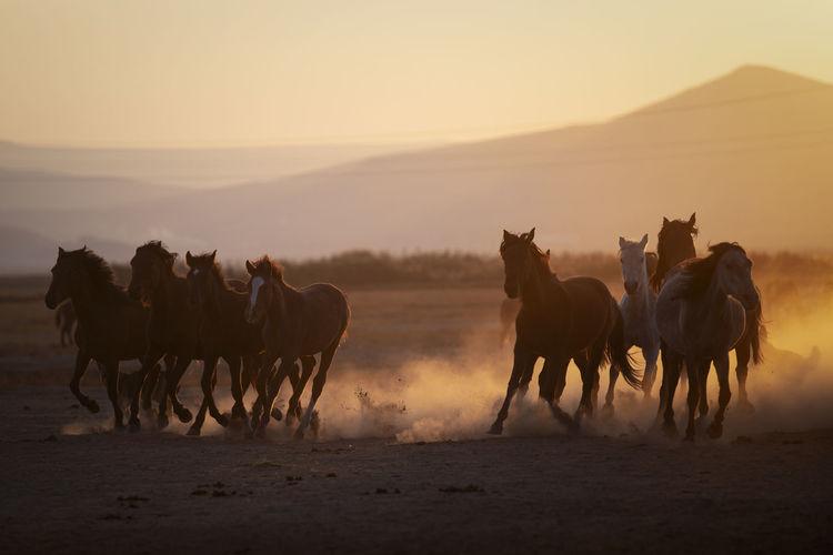 Horses running at desert