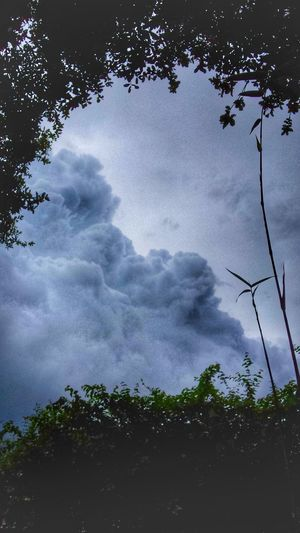 Stormy Skies From Our Backyard New Bamboo Shoots Natural Frame