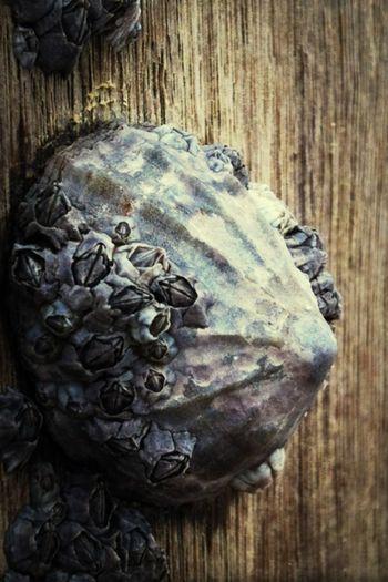 Beautiful barnacle! Wood Captain Barnacles Taking Photos Hello World
