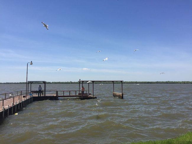 Water Sky Bird Sea Flying Vertebrate Animal Themes