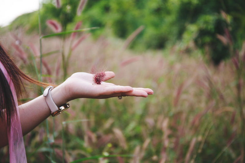 Grass Adult Close-up Day Flower Flowers Focus On Foreground Hand Holding Holding In Hand Holding On Human Body Part Human Hand Lifestyles Nature One Person Outdoors People Pink Grass  Plant Real People Women