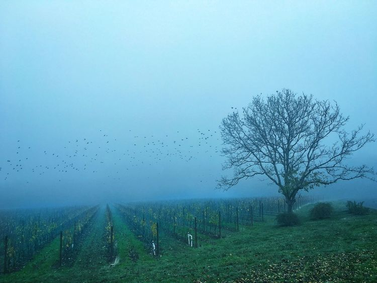 Beautiful foggy day in Oregon wine country. Road Trip Iphonephotography IPhoneography IPSWeather Winecountry Oregon Trees Birds Fog