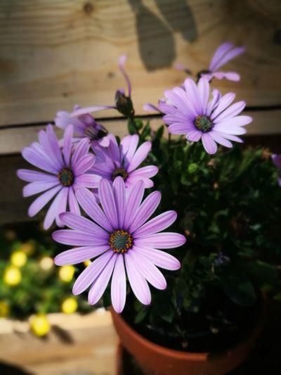 Flower Head Flower Photography Themes Petal Purple Close-up Plant Blossom