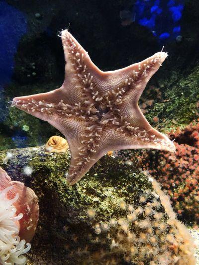 Animals In The Wild Animal Wildlife Animal Themes Sea Life Animal Sea Underwater Starfish  Marine UnderSea