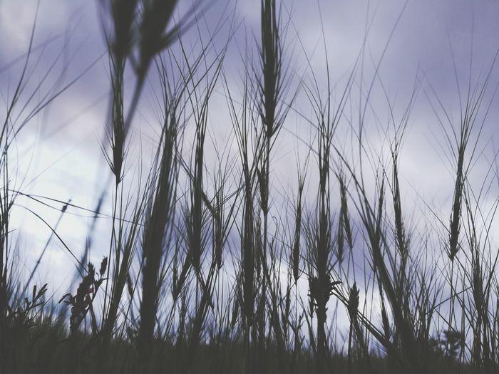 Fotoğraf çekmeyi öğreneceğim 😂 I will learn to take photos 😂🤣 Gokyuzu Sky ⛅💙👌 EyeEmNewHere EyeEm Selects