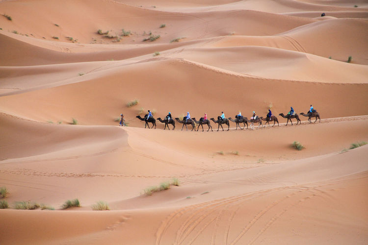 Desert with dunes and row of people riding camel