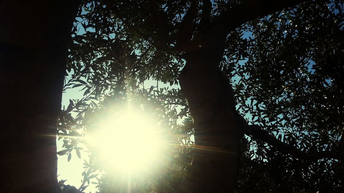 Sun Sun Rays Beautiful Sun ☉☉ ☉ ☉🌞🌞☉ ☉☉☉ ❤❤ Beautiful Nature Nature Collection Nature Nature Photography Beautiful 🌸 Good