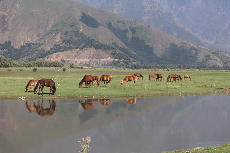 Horses Mountain