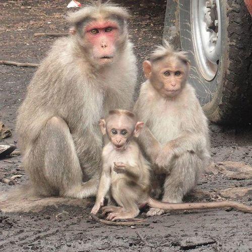 Say cheese Family Familyphoto Smileplease Monkey Monkeys Kid Mom Dad Child Animal Cute