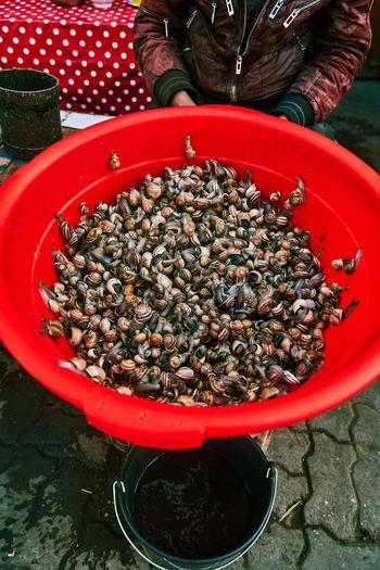 Snails In
