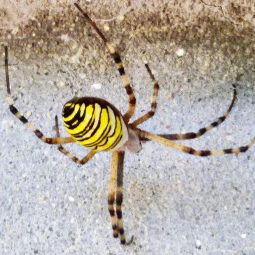 One Animal Animal Themes Wildlife Ragno Arte