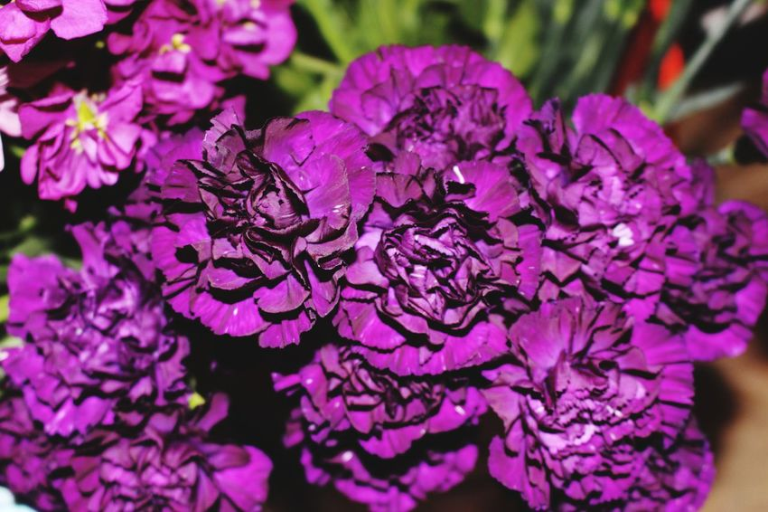 Flowerchild Flower Purple Nature Plant Beauty In Nature Close-up Growth No People Freshness Fragility Outdoors Day Flower Head