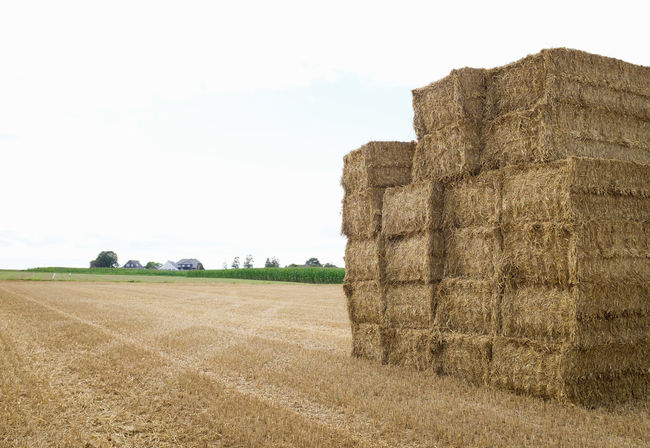 Agricultural Land Agricultural Machinery Agriculture Agriculture Beauty In Nature Cereal Plant Day Farm Farm Farm Life Farmland Field Field Fields And Sky Fields Of Gold Grass Landscape Nature No People Outdoors Sky
