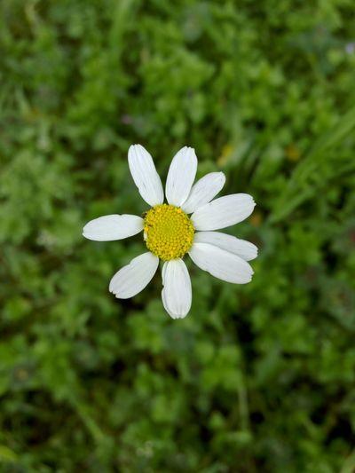 Nofilter Nature Flower Turkey Izmir