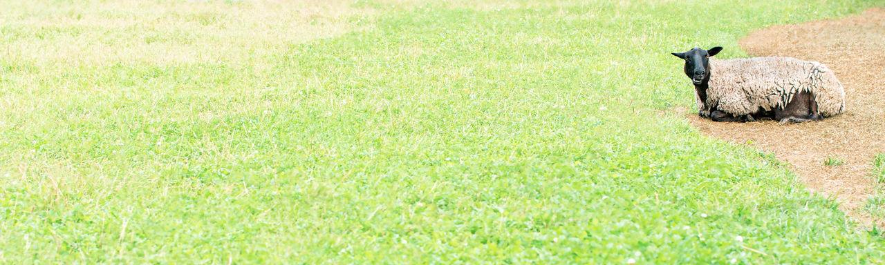 View of snake on grassy field