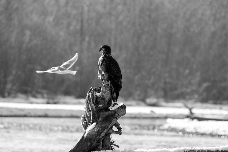 Animal Themes Animal Wildlife Animals In The Wild Beauty In Nature Bird Bird Of Prey Close-up Day Focus On Foreground Nature No People One Animal Outdoors Perching Tree Water The Week On EyeEm