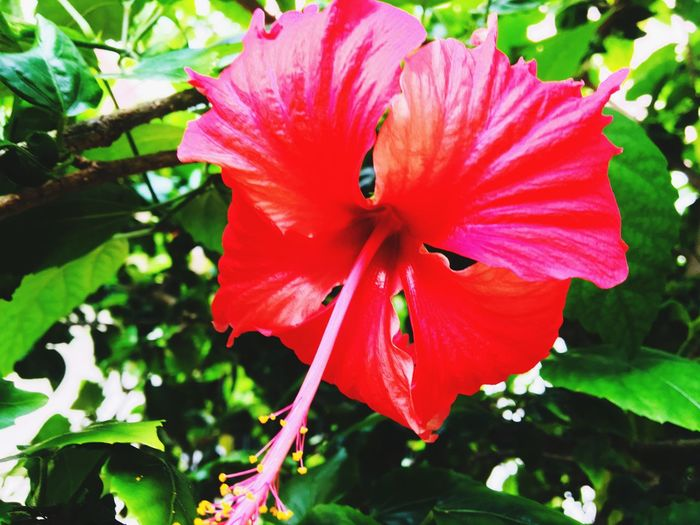 Fresh Moments Plant Flower Flowering Plant Growth Freshness Beauty In Nature Petal