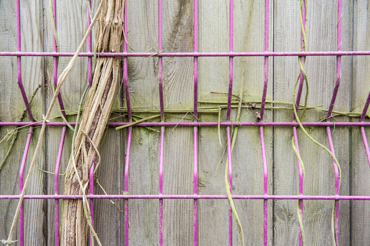 Pink Architecture Backgrounds Barrier Boundary Building Exterior Built Structure Close-up Day Fence Full Frame Large Group Of Objects Nature No People Old Outdoors Pattern Textile Wall Wall - Building Feature Wood - Material