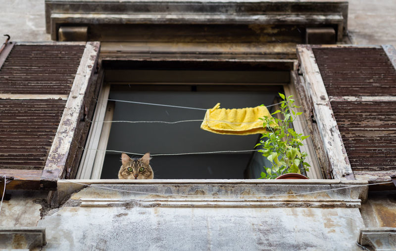 Cat looking down of a old window in Rome, Italy Cat Cats Animal House Pets Pet Pet Photography  Italy Rome Roma Old Window Frame Window Blinds Towel Citylife Window Architecture No People Building Low Angle View Drying Wall