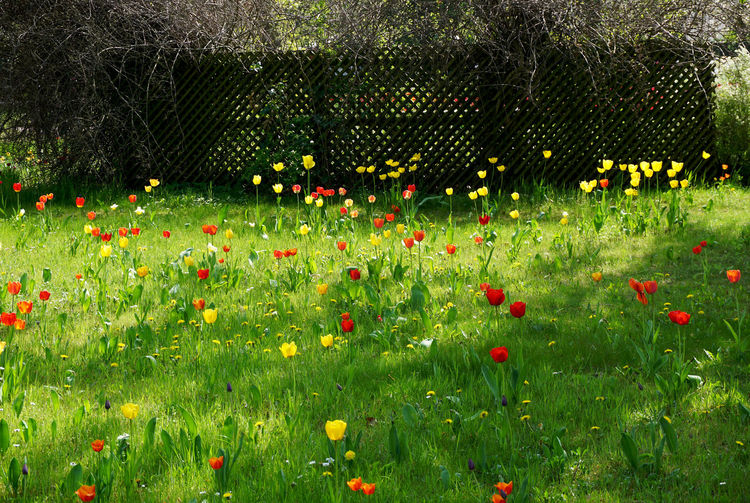 springtime in Berlin Plant Flower Flowering Plant Growth Grass Green Color Beauty In Nature Freshness Nature Field No People Land Day Fragility Vulnerability  Tree Outdoors Multi Colored Landscape Flowerbed Flower Head Tulips Grass Springtime