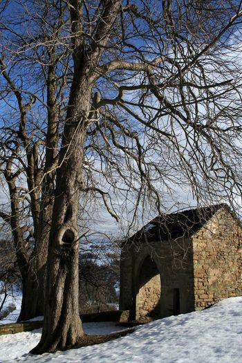 stone castle building in the snow Antique Castle Langhe Piedmont Italy Arch Architecture Bare Tree Branch Building Exterior Built Structure Clear Sky Cold Temperature Day History Nature No People Outdoors Sky Snow Stone Building Tree Winter Winter Trip