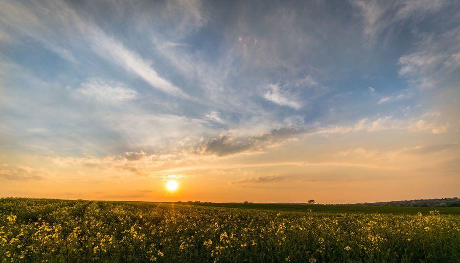 Spring evening. Agriculture Beauty In Nature Cloud - Sky Environment Field Growth Landscape Nature No People Outdoors Rural Scene Scenics - Nature Sky Sun Sunlight Sunset Tranquil Scene Tranquility