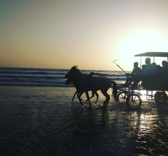 Beach Horse Horse Riding Horse Cart Silhouette Sunset Water Sky Nature