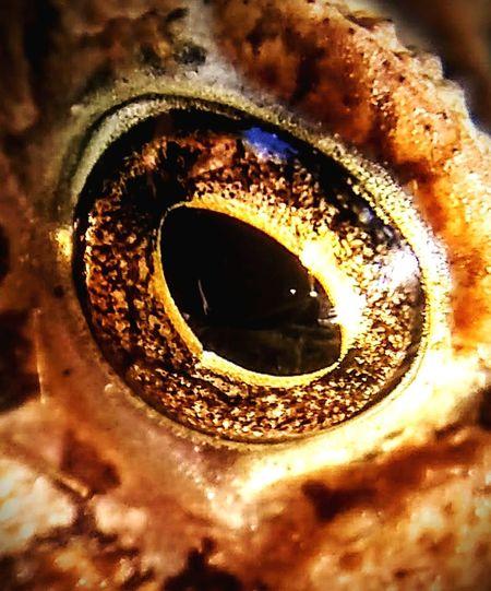 """Eye of"