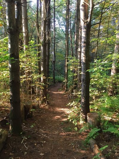 outdoor trail vipassna Massachusetts EyeEm Best Shots Wood No Filter Plant Tree Travel Trail Forest Tree Nature Day Tree Trunk Outdoors Beauty In Nature No People Tree Area Sunlight Sky Growth