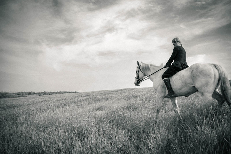 Black & White Field Horses Outdoors