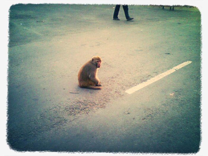 mischief mind Monkey The Mischief Makers