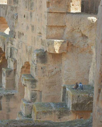 Coliseum Theater Thysdrus El_jem Mahdia History Carthagina Wikilovesmonuments Dove روندي فو :)