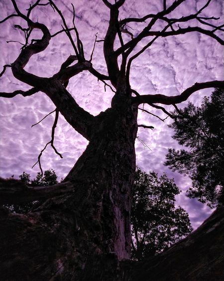 clouds sun tree sunlight Clouds Sunlight Tree Branch Tree Trunk Silhouette Sky Close-up Landscape