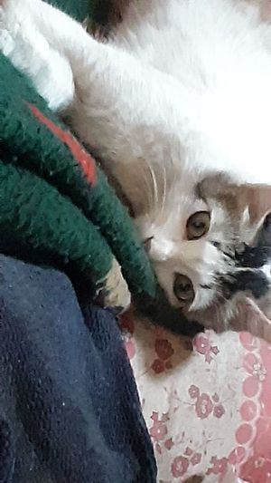 Close-up of cat lying